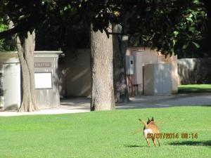 ciq 09 07 2014 rambot chien pelouse